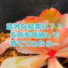たにログ091 【検証】エケベリアを雨ざらしで育ててみたら意外な結果に?!