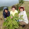 2019年6月9日(日) ガイド報告☆幻のベニバナヤマシャクヤクを求めて学能堂山へ!