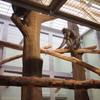 夜はまた別の顔を楽しめる!札幌・円山動物園の「夜の動物園」に行ってみた