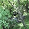 皇居ランニングコース〜北の丸公園