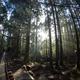 屋久島の縄文杉をツアーでなく個人で見に行く際の留意事項