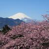 桜、菜の花、富士山、青い空
