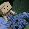 雨の季節の主役 - 紫陽花って凄いね! のお写ん歩