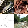 順番に読むだけでまるわかり!初心者のためのテンカラ渓流釣り入門記事まとめ