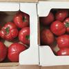 長崎県 川棚町 小串トマト