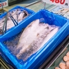 魚が生臭い!海っ子が魚を買うときに気をつけていること。