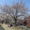 多摩川桜百景 -73. 桜づつみ公園-