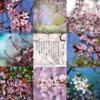 アメブロ、Instagram、Facebookに 作家「琴華」さんの詩をご紹介いたします。