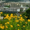 JR根岸線 横浜市栄区