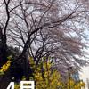 月刊野島高彦2017年4月号