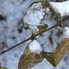積雪あり、ちょっぴり「ホワイトクリスマス」。