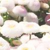 【ただの日記】お花を見に、近所の農業公園へ