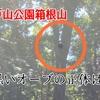【心霊】戸山公園・箱根山の写真に写った黒いオーブを分析