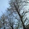 東京呆然散歩/ホームレスのおじさまとリーアム・ニーソン/再会の桜/中里学