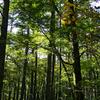 温暖化を逆転させる-ドローダウン③-森林社会