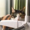 【愛猫日記】毎日アンヌさん#206