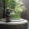 SECRETBASE × THREE TIDES TATTOO 彫ひろ  / SUSHI DOKURO[3期/フルカラー版黒成型]