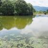 嬉野総合運動公園の池(佐賀県嬉野)