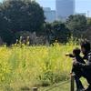 子どもと浜離宮恩賜庭園で見頃の菜の花畑を満喫〜公園に飽きたら庭園のお散歩へ〜