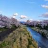 ひとり・・・桜をみて過ごす。新型コロナウィルスなかなかつらい。