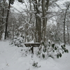 ◆1/13       高館山~のろのろラッセル③…動物の足跡を追うように登った。