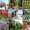 Một số vấn đề về xuất khẩu nông sản của Việt Nam
