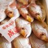 2017年7月22日 小浜漁港 お魚情報