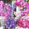 Ma Maison(マ・メゾン)〜花いっぱいの一軒家タイ料理レストラン〜
