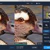 Topaz Sharpen AI で野鳥の写真を処理してみた –– 素速く動く鳥の動体ブレやピンボケの補正に効果はあるかな?