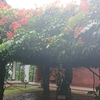 生活の木でアーユルヴェーダをした後に紅茶工場見学からのシンハラージャ熱帯雨林へ