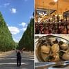 パリ/サンセバスチャン旅行記6 ヴェルサイユ宮殿後半&地元で人気の食堂へ