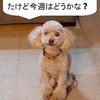 【あさイチの株の素】金曜日のNYは小動き、東京は週末のリターンリバーサルの動きが収まるか