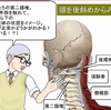 第二頚椎を触って、脊椎全体をイメージチェック!
