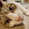 13歳の猫誕生日