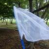 夏らしく蝉取りをしました