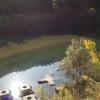 近所の川で釣りをしてみよう! ~身近だからと言って侮れない面白さがそこにある~