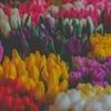 【3月】病気だからこそ共感する10の名言【フリー素材】