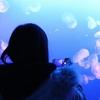 【デート】現役女子大生が行きたい!新江の島水族館の王道デートプラン
