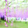 孫と公園。その6 木場公園と元加賀公園