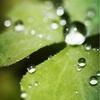 サントリー『天然水GREEN TEA』その実態とあじに迫る