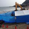 鎌倉の海水浴場に打ち上げられたクジラの処理はどうなる?