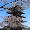 多摩川桜百景 -13. 香林寺-