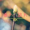 春の訪れ~旭山桜と長寿梅の苔玉の成長~