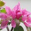 庭の春の花3