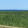 8月4日 17日目  知床半島に向かいます。