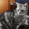 "<span itemprop=""headline"">小鳥の水浴動画に反応する猫</span>"