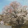 シニアクラブ(85) 春の信州を巡る旅(1) 名桜を巡る春旅を主体とした一泊旅行