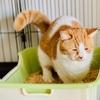 【猫学】トイレの最中に愛猫が鳴いていました。その理由とは?
