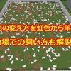 羊の色の変え方を虹色から羊毛まで 牧場での飼い方も解説!