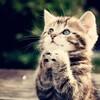 大阪松井知事から河村市長に助命メール 名古屋の猫30匹殺処分の危機…